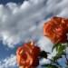 いい雰囲気の花と空