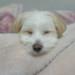 うたた寝する犬